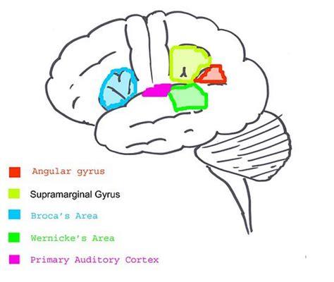 language is language acquisition versus language learning