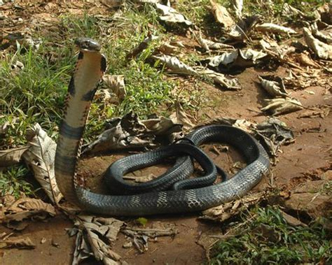 Mba Reptiles by Mudumalai Industrial Visit Industrial Tours Visit