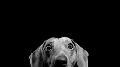 wallpaper dog bdfjade wallpaper dog bdfjade