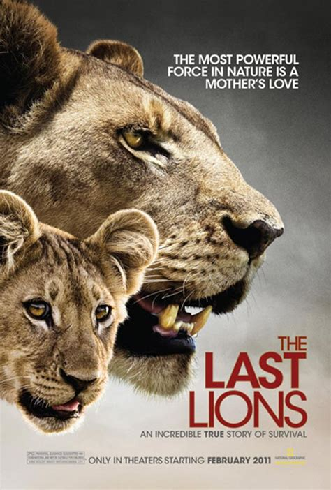 lion film pictures barbaric poetries the last lions