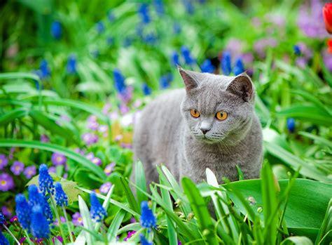 Katzen Giftige Zimmerpflanzen Bilder by Giftige Pflanzen F 252 R Katzen Im Fr 252 Hling Zooroyal Magazin
