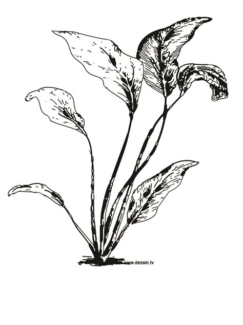 Free Coloring Pages Of Seed Plant Coloring Pages Plants
