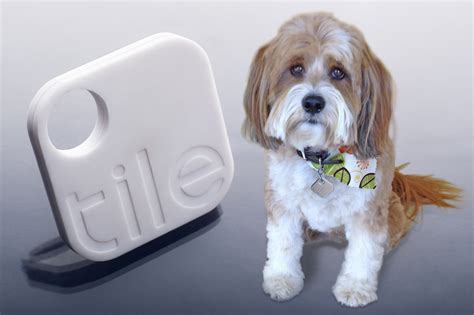 tile for dogs find your lost with the tile app poobagger scoop
