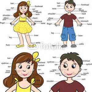 Wall Mural Paper fototapete cartoon boy and girl vocabulary of body parts