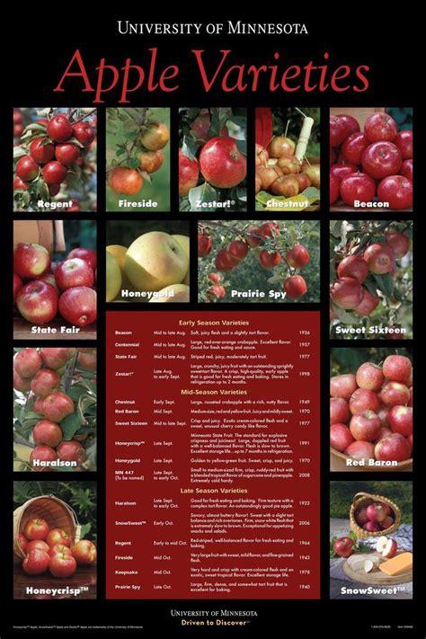 apple varieties apple varieties fruits veggies pinterest