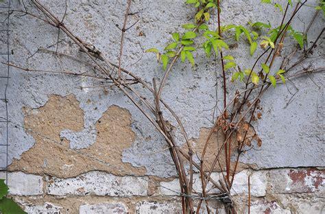 Daun Semi gambar pohon cabang menanam daun bunga bagasi