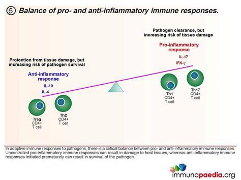innate immunity a question of balance a closer look at cd4 t cells immunopaedia