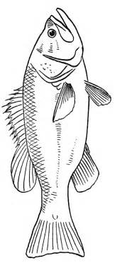 fish coloring pages coloring pages to print