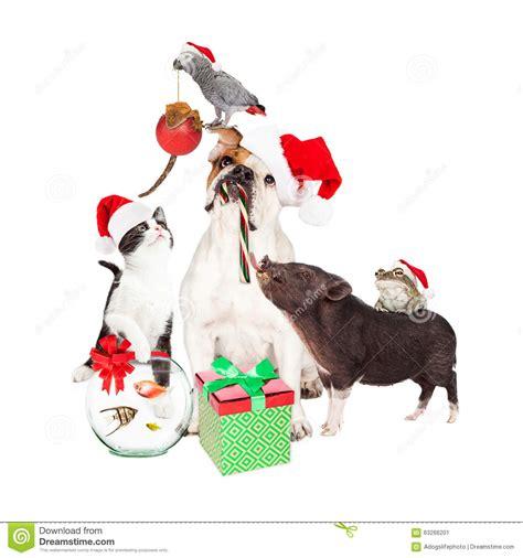 funny christmas pet compositie stock photo image