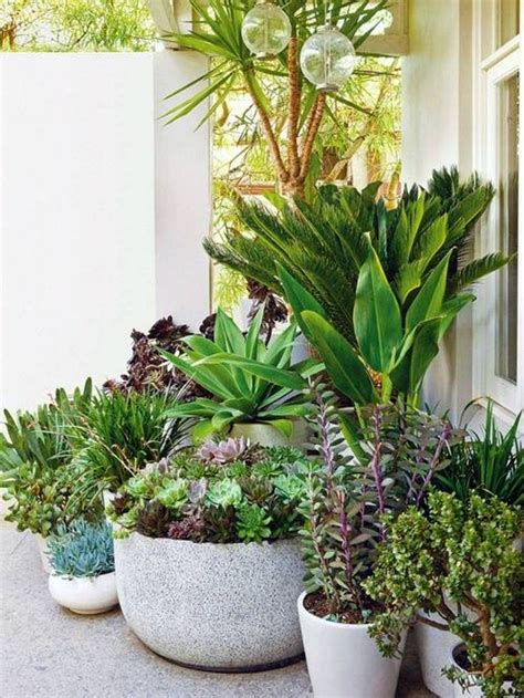 landscaping and outdoor building stunning potted plants landscaping succulent and tropical