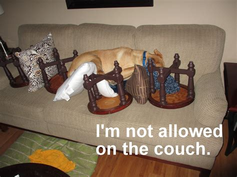 keep dogs off the couch pets and furniture part 2 puddin s training tips