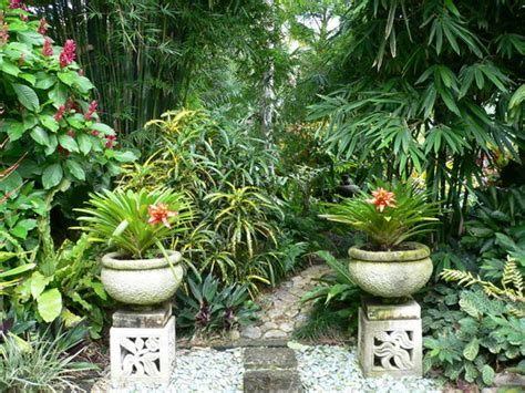 tropical backyard plants plants for tropical gardens