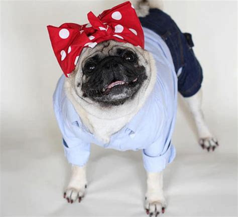 pug costumes pugs in costumes www imgkid the image kid has it