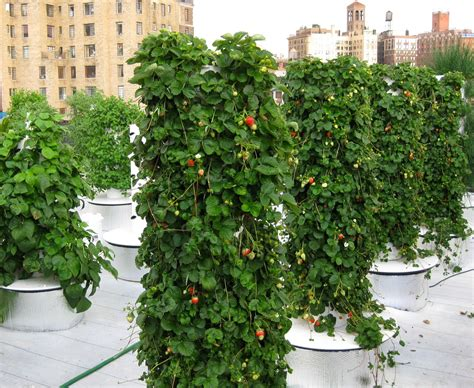 What Is Vertical Gardening How Vertical Gardening Could Help Save The World