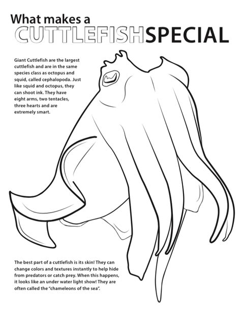 exciting photo variety of cuttlefish coloring pages