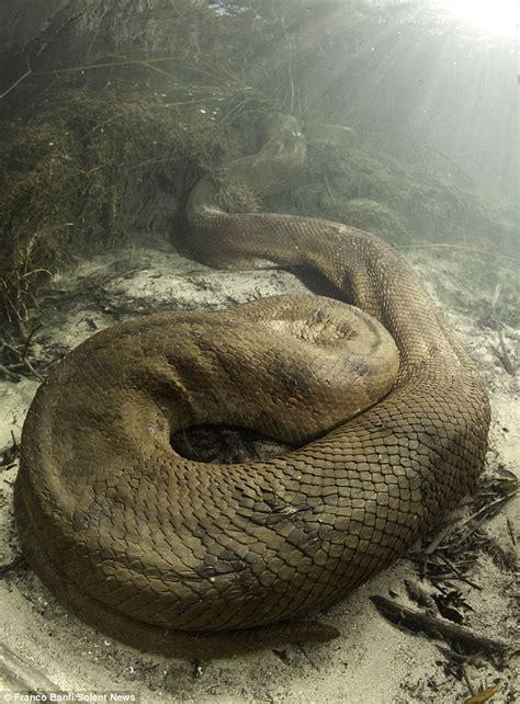 film anaconda terbaik ditemukan ular anaconda raksasa di hutan amazon brazil