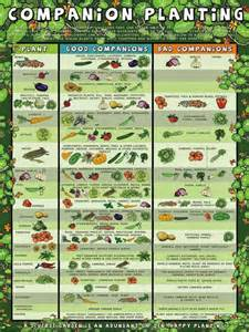vegetable gardening in southern california southern california garden guide basic gardening easy