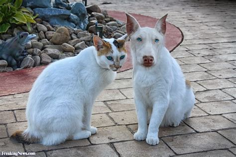 cat and hybrid and cat hybrid