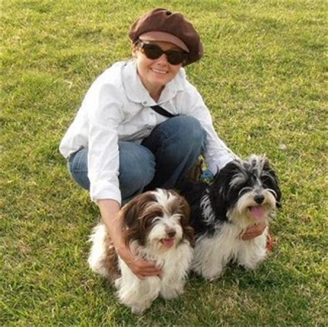 what age is a puppy grown havanese fully grown breeds picture