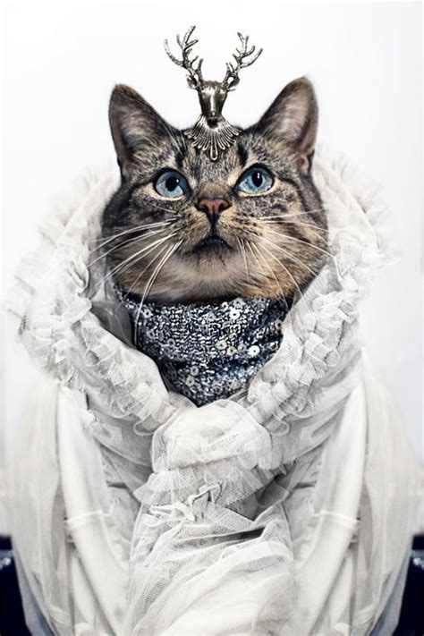 Cat Wardrobe by Index Of Wp Content Images 2014 01 Cat Fashion