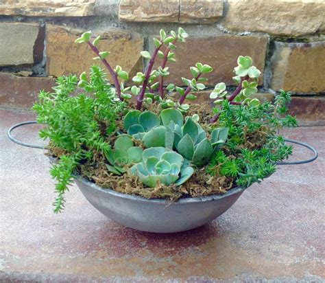 Succulent Container Gardens by Succulent Container Gardens Garden Treasures By