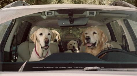 subaru commercial golden retriever forget the ascent subaru s new ads for the dogs