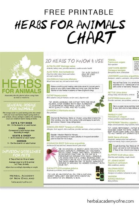 herb care chart 15 best dog care from vet organics images on pinterest