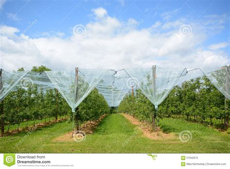 apple france apple orchard in france stock photo image 57942975