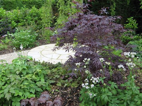 Patio Trees For Shade by Christine Lees Garden Design A Garden In Hertfordshire