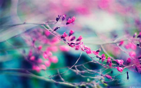 imagenes wallpapers hd con movimiento wallpapers de flores hd para usar como fondo del movil 4
