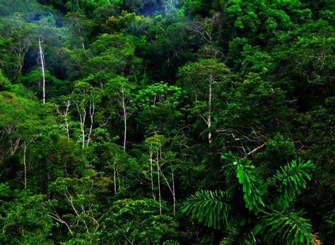 free wallpaper jungle jungle forest hd wallpapers photos desktop wallpapers