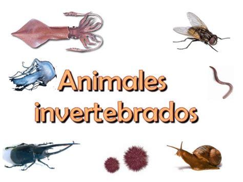 imagenes animales invertebrados invertebrados