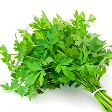 Organic Parsley organic italian parsley seeds seed bank
