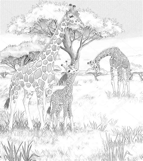 african landscape coloring page african savannah landscape book covers