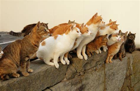 aoshima cat island 島民15人とネコが100匹以上暮らす島 青島 で大量のネコと戯れてきました gigazine