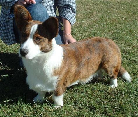 best small for no shedding best dogs for no shedding pet photos gallery 1mz3be42jo