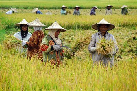 Pendidikan Rakyaat Petani kesejahteraan petani menurun edunews