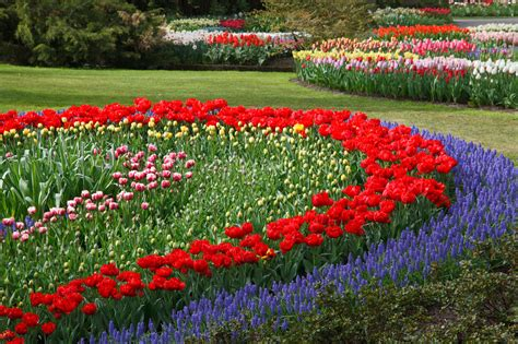 flower garden free stock photo public domain pictures