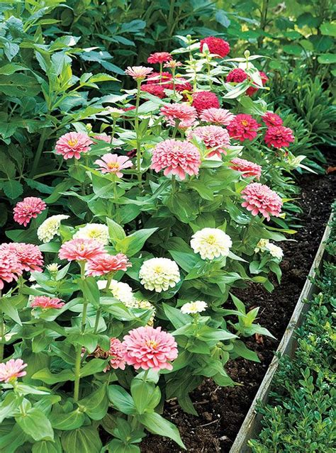 Best Flowers For Cutting Garden Best 25 Flowers For Cutting Garden Ideas On Cut Flower Garden Cut Flowers And
