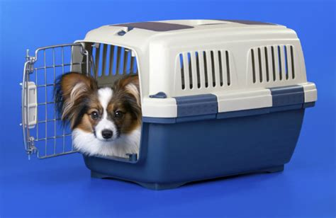 crate a puppy overnight tips for successful puppy crate of living
