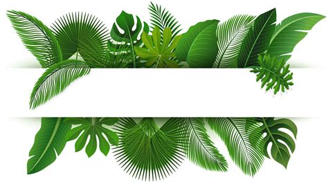 sign  text space  tropical leaves suitable