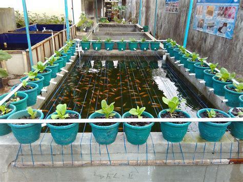 ayo panen ikan  sayuran  aquaponik psm jogja