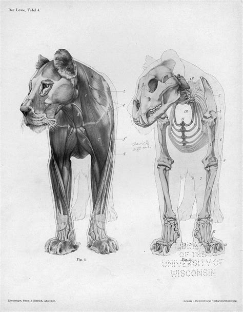 1000+ ideas about Animal Anatomy on Pinterest | Horse