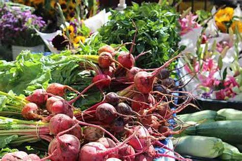 pengertian tanaman hortikultura beserta contohnya secara