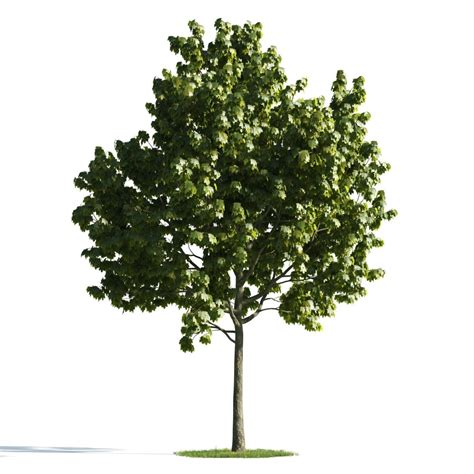elm tree symbolism 100 elm tree symbolism moonstruck madness meaning