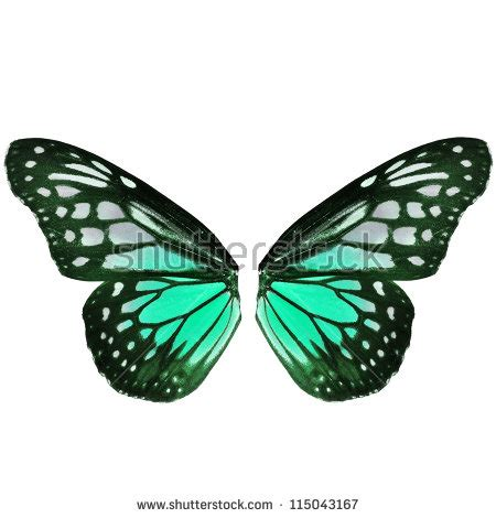 Butterfly Wings open wings of the butterfly stock photos images