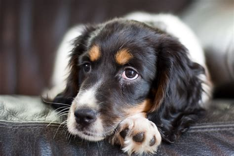 puppy heaving heaving in dogs definition cause solution prevention cost