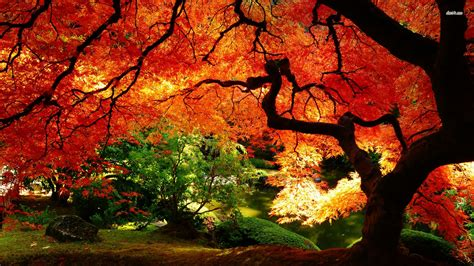Batman Desk Autumn Landscape Wallpaper Nature Wallpapers 4315