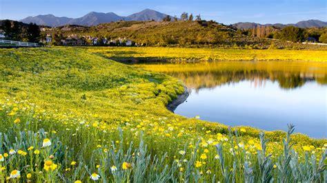 lake shore meadow  yellow flowers  mountains