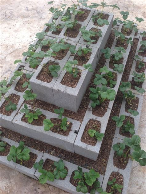 raised strawberry bed strawberry bed gardening pinterest beds bed ideas